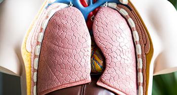 Anatomia-Humana