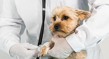Cuidados-Clinicos-em-Pequenos-Animais