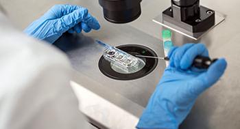 Embriologia-Humana