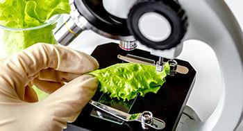 Microbiologia-dos-Alimentos