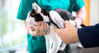 Patologia-Veterinaria-Especial-para-Caes-e-Gatos---Basico