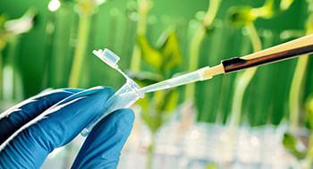 Plantas-Medicinais-com-Atividade-Anti-inflamatoria
