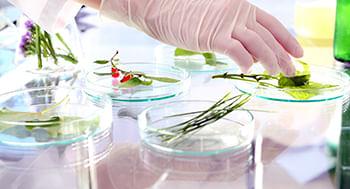 Plantas-Psicoativas--Uma-Abordagem-Farmacologica