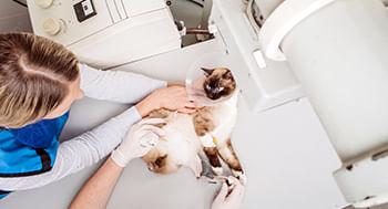 Radiologia-em-pequenos-animais