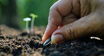 Cultivo-de-Plantas