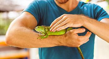 Anfibios-e-Repteis--Classificacao-Diversidade-e-Ecologia