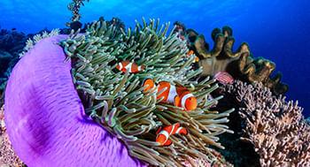 Biologia-e-Taxonomia-de-Macroinvertebrados-Aquaticos