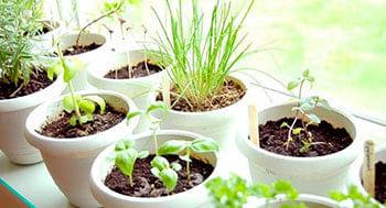 Cultivo-de-Ervas-e-Hortalicas-em-Casab